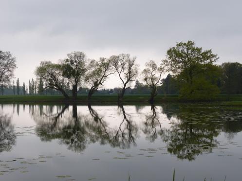 Bäume spiegeln sich im Wasser eines Teiches im Wörlitzer Park