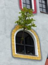 Hundertwasser Schule in Wittenberg Fenster mit Baum