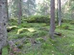 Natur in Schweden 2