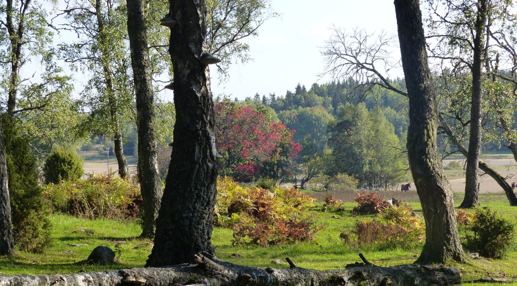 Natur in Schweden 5