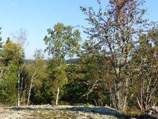 Natur in Schweden 1